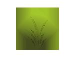 logo_белый150x150